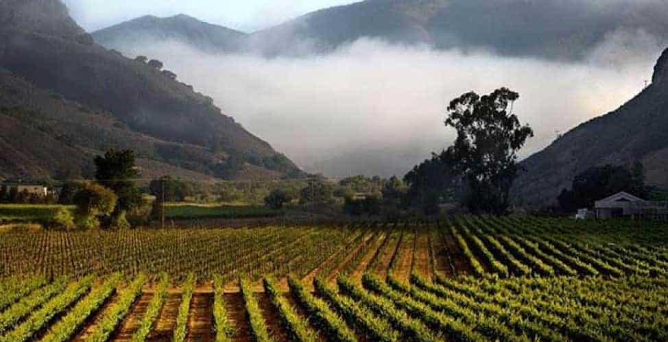 The Bien Nacido vineyard