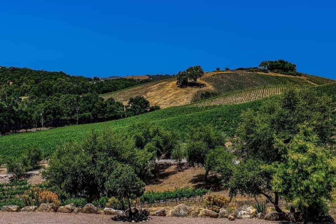 Wineries of Central Coast California