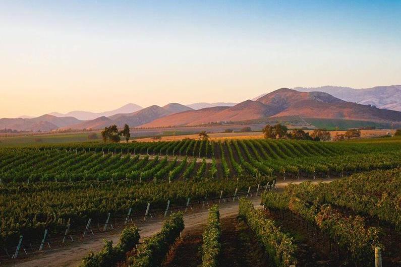Best Los Olivos Wineries
