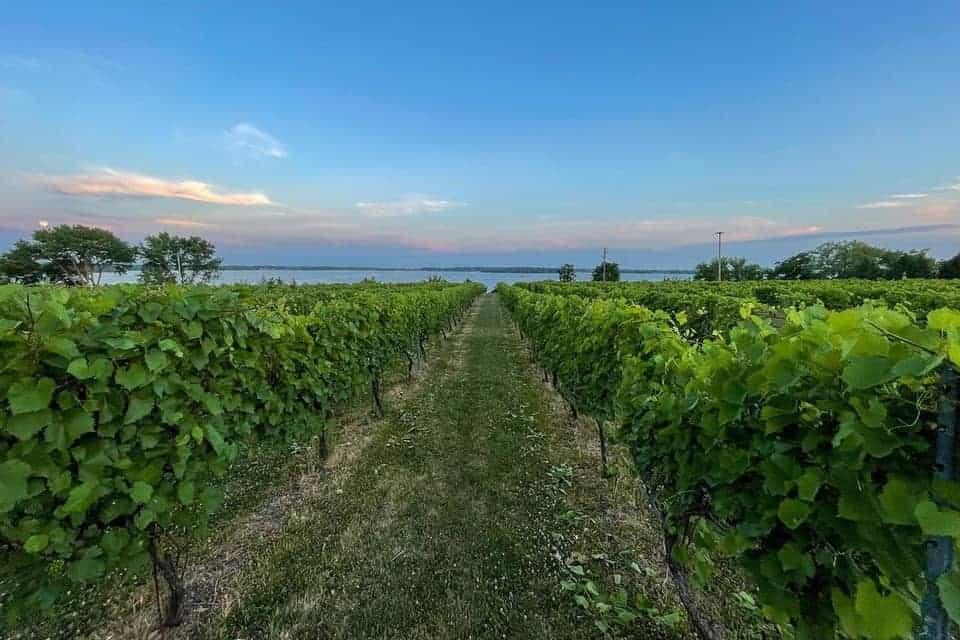 Best Wineries in Minnesota