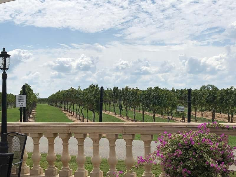 Boutique Winery Experience in the Fredericksburg Texas Hill 3