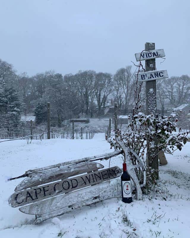 Cape Cod Winery History