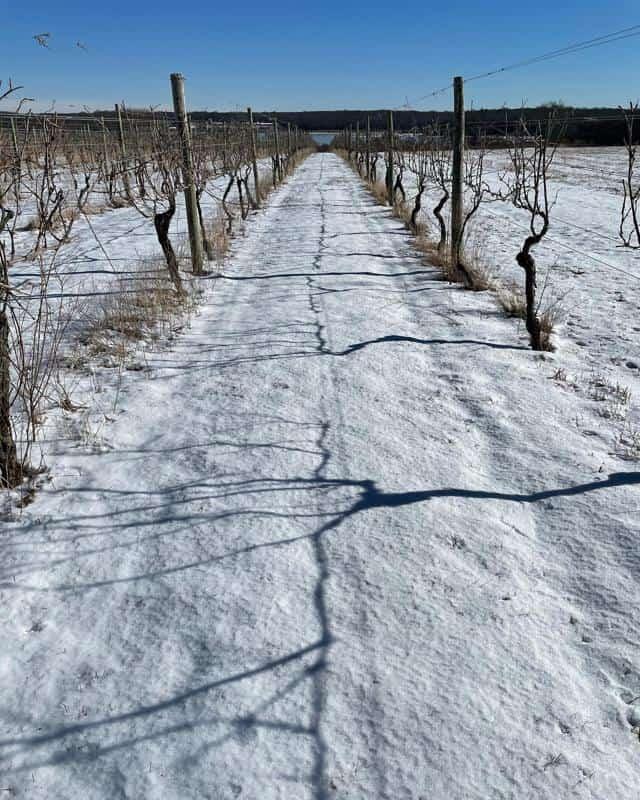 Carolyn's Sakonnet Climate and Soil