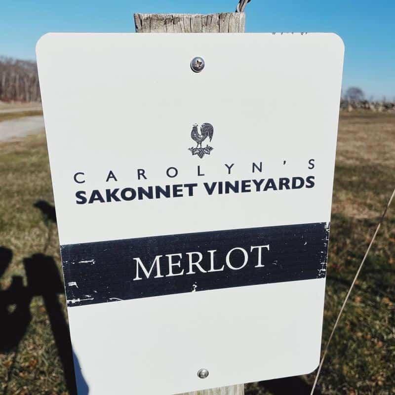 Edit Carolyn's Sakonnet Vineyard