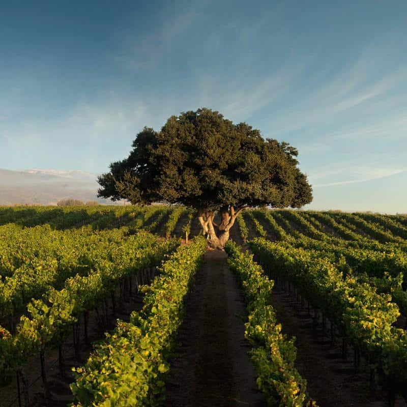 Hahn Family Wines 2