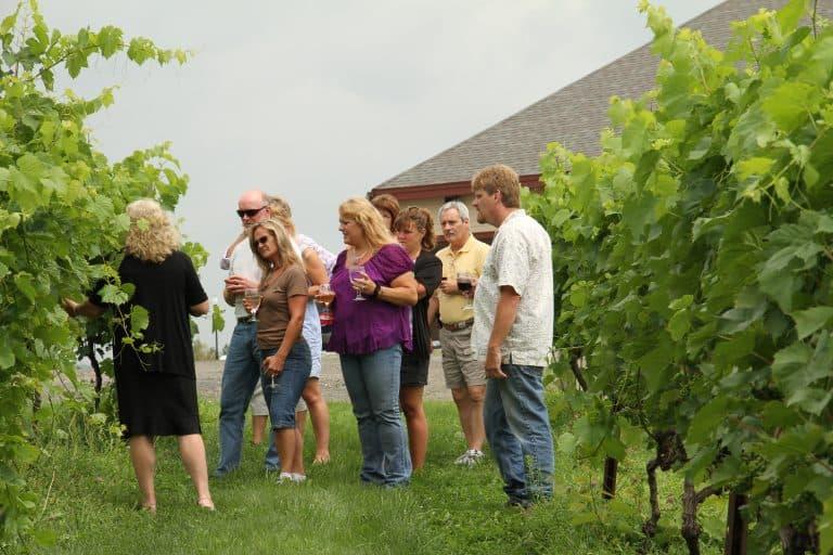Honora Winery and Vineyard 3