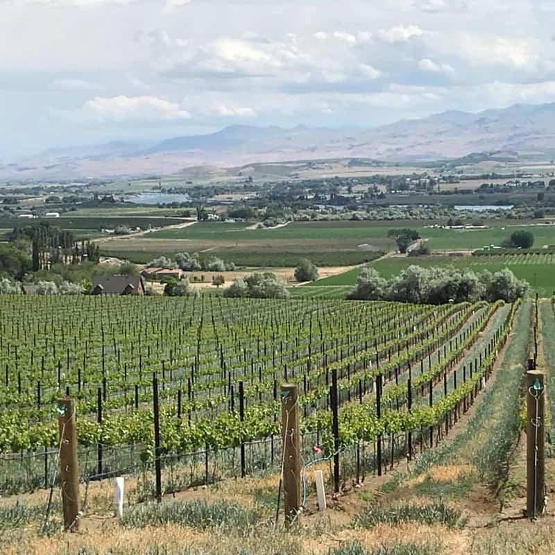 Koening Vineyards and Distillery 3