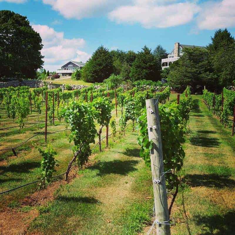 Langworthy Farm Vineyard