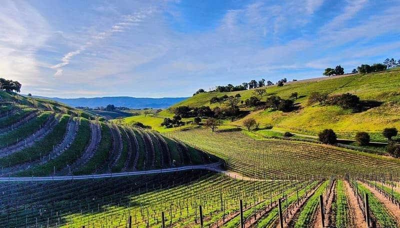 Los Olivos Vineyards