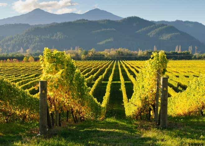 Marlborough wine region