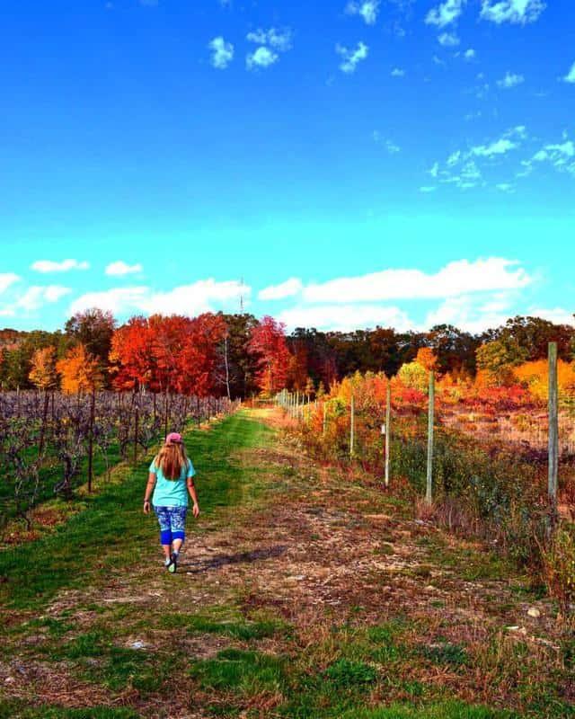 Maugle Sierra Vineyard 3