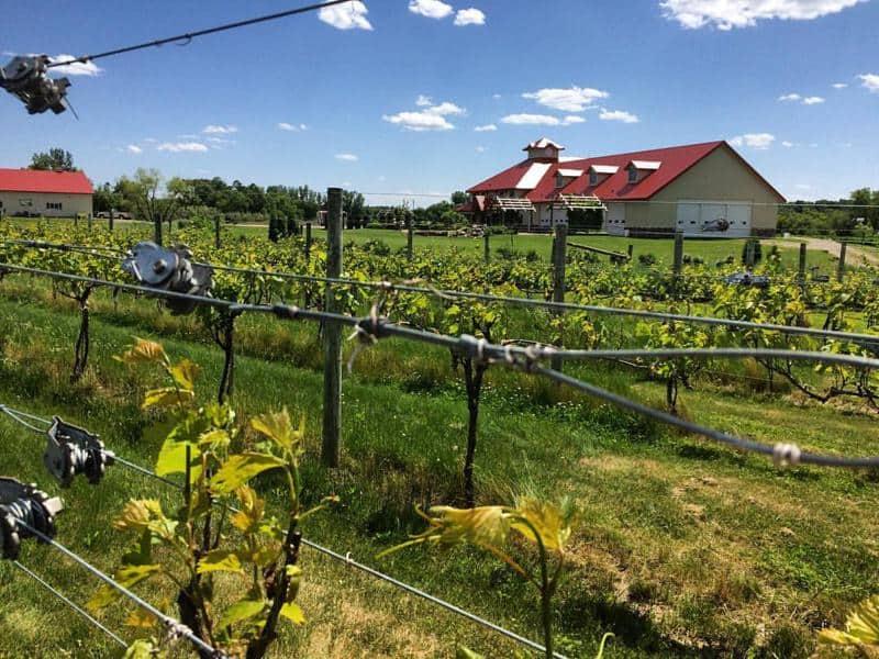 Millner Heritage Vineyard & Winery 1