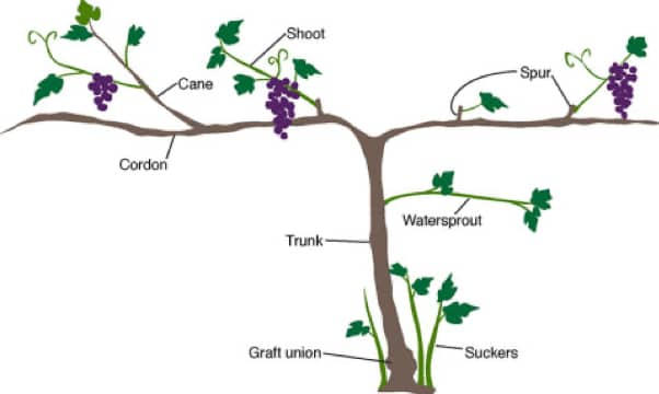 Planting Guide 2