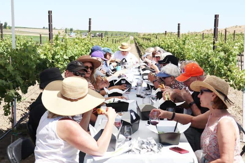 Scoria Vineyards 1
