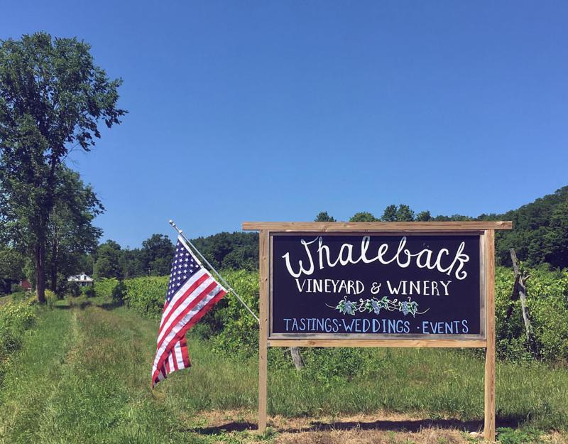 Whaleback Vineyard 1