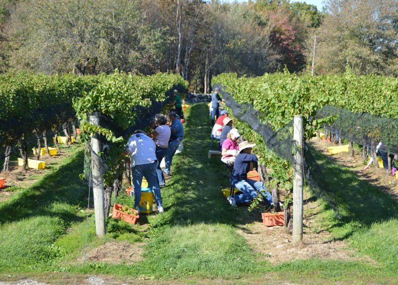 Winery Events 3