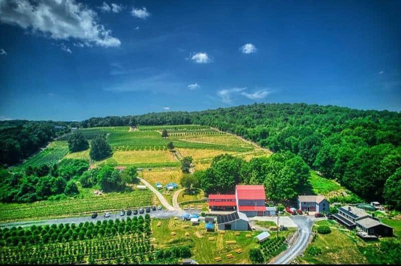 Glorie Farm Winery 1