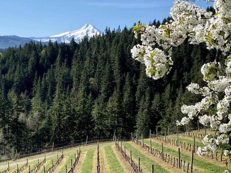Phelps Creek Vineyards 2