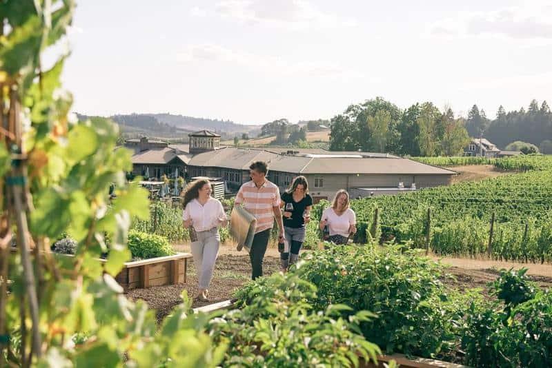 Adelsheim Winery 1