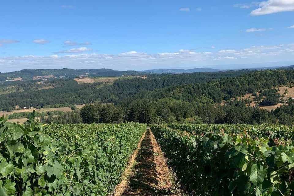 Best Willamette Valley Wineries