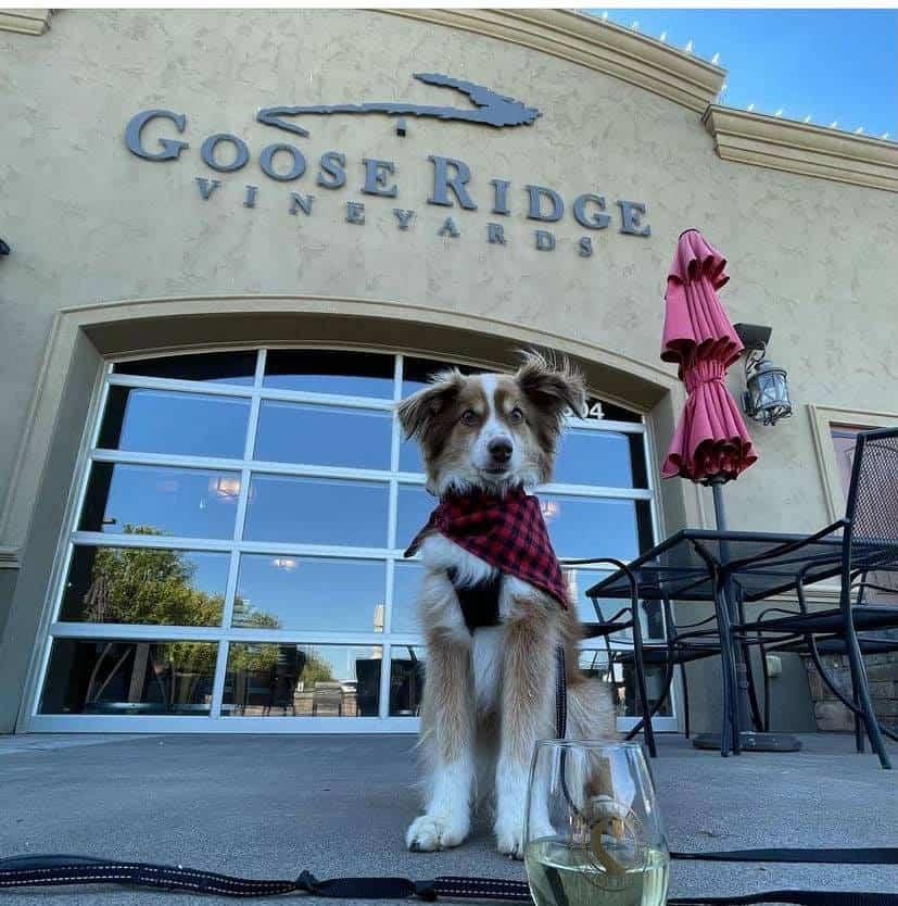 Goose Ridge Estate Vineyard and Winery 2