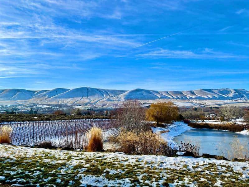 Terra Blanca Winery and Estate Vineyard 1