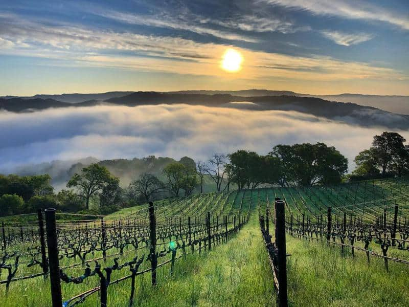 What Wine Is Napa Valley Known For