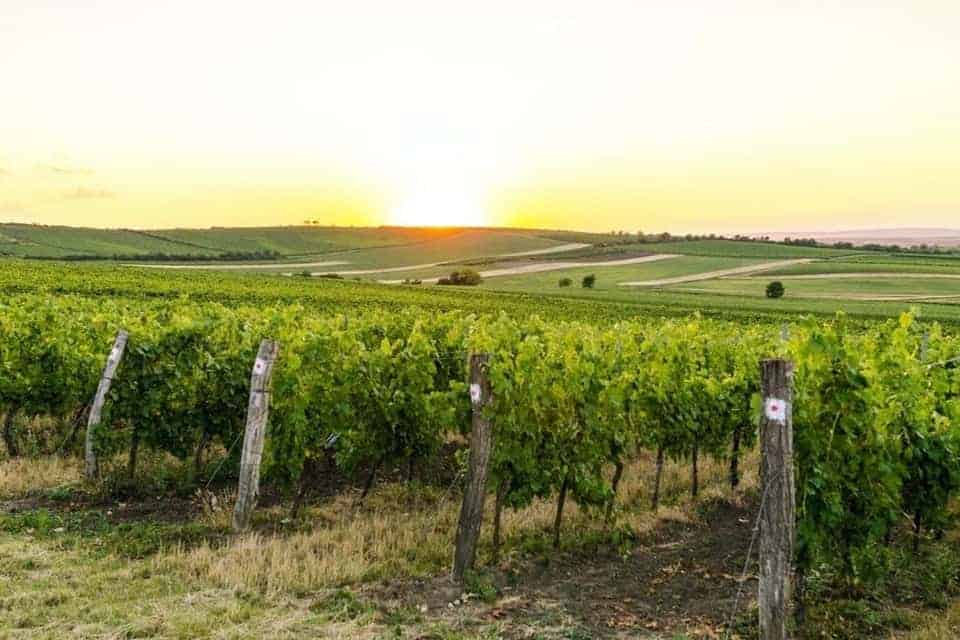 Best Wineries in Cambria