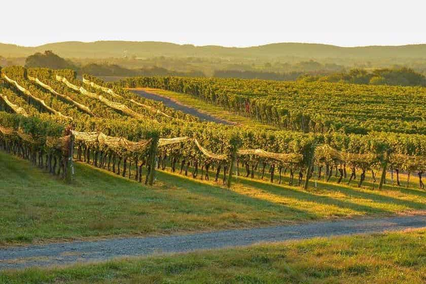 Best Wineries in Maryland 1