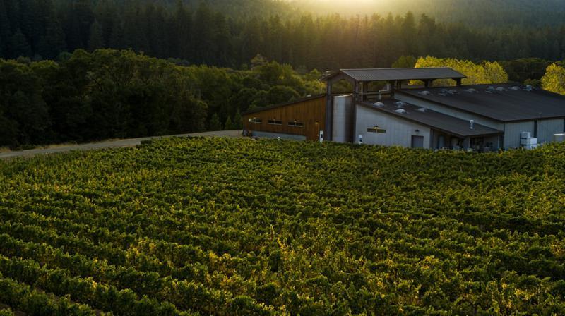 Goldeneye Winery 1