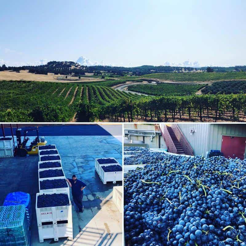 Helwig Vineyards & Winery 2