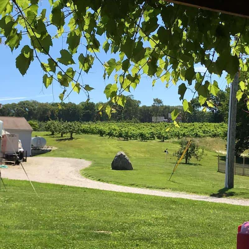 Holmberg Orchards and Winery 1