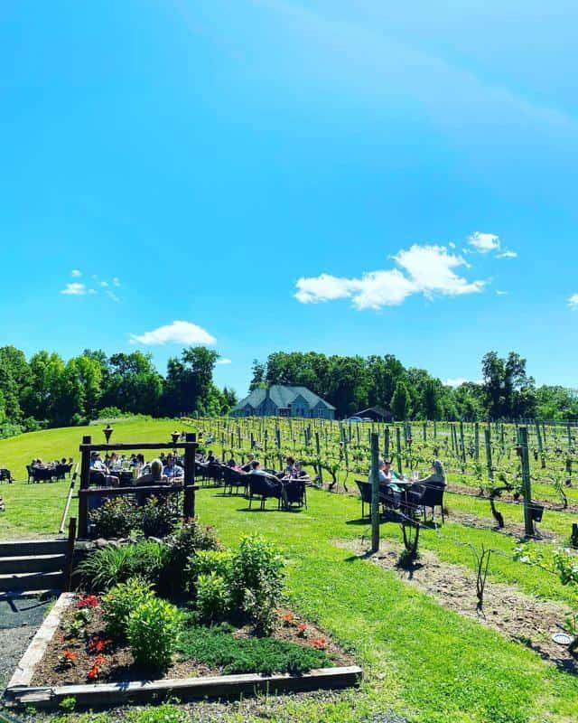 Paradise Hills Vineyard & Winery 2