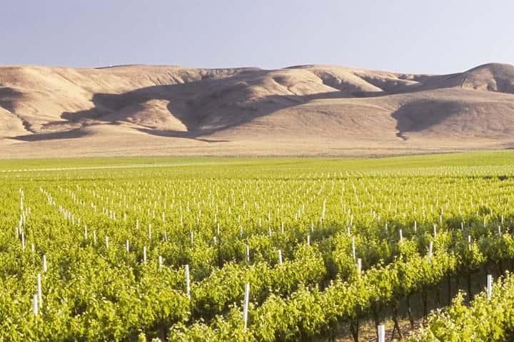 Prosser Wineries